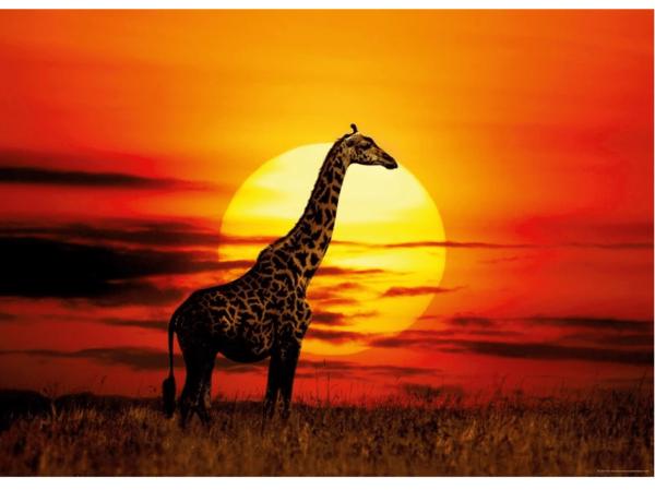 "PUZZLE HEYE 29688 : ""Sunny Giraffe"" - 1000 pièces"